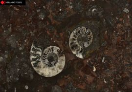 mermer-grande-fossil